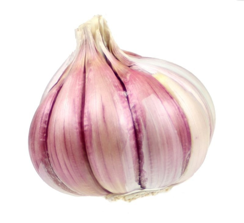 garlic on a white background